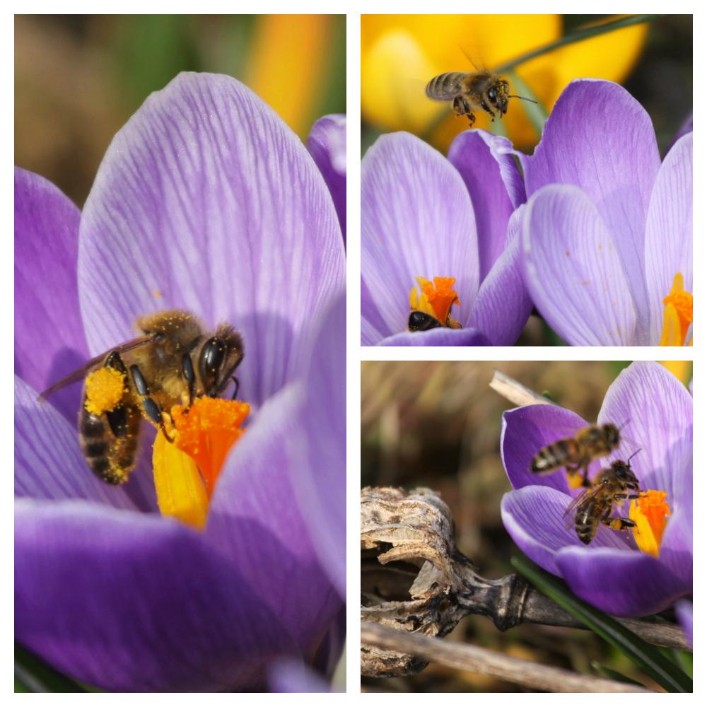 Planten Voor Bijen.Nieuwsbericht Gemeente Hof Van Twente